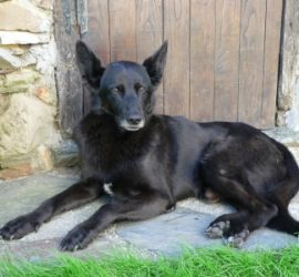 Dog friendly hotel weston super mare